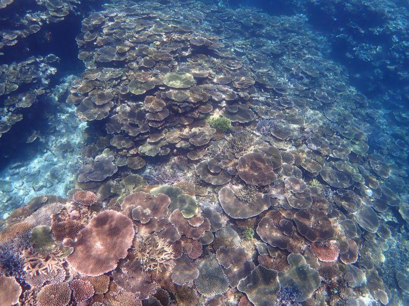 石垣島米原の珊瑚礁