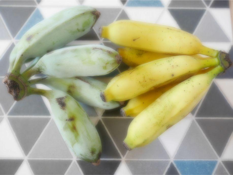 石垣島の島バナナ