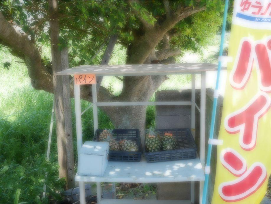 石垣島のパイナップル無人販売