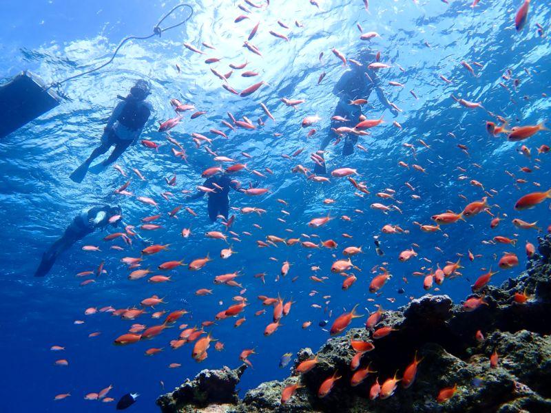 海中を泳ぐ熱帯魚