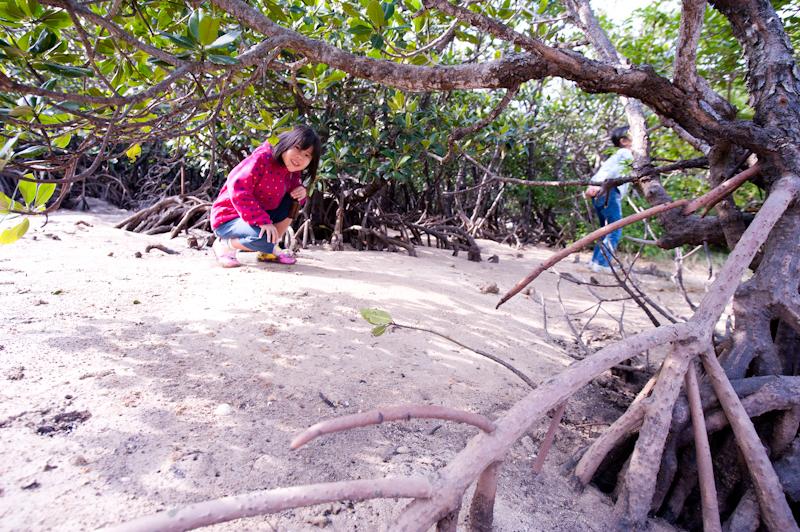 吹通川のマングローブ林で遊ぶ子供