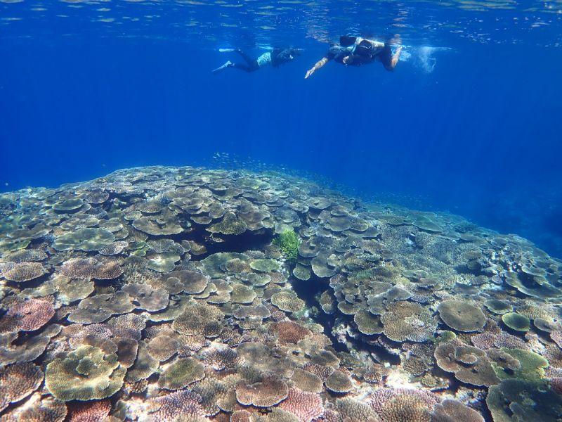 珊瑚礁でシュノーケルを楽しむファミリー